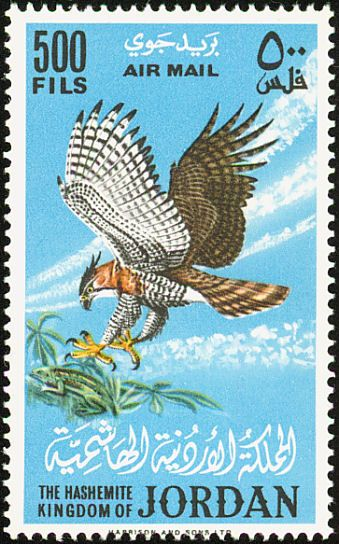 jordan ornate hawk-eagle1964.jpg