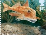 sust fish 1st red gurnard.jpg