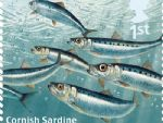 sust fish 1st cornish sardine.jpg