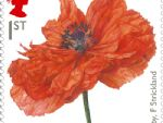 first world war  1914 high-res poppy stamp.jpg