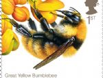 2015 bees 1st great yellow.jpg
