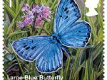 rs 1st large blue butterfly.jpg