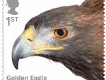birds of prey 1st golden eagle.jpg