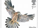 birds of prey 1st merlin.jpg