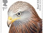 birds of prey 1st red kite.jpg