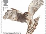 birds of prey 1st sparrowhawk.jpg