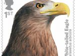 birds of prey 1st white-tailed eagle.jpg