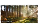 forests �1.55 sherwood.jpg