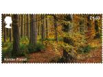 forests �1.60 kielder.jpg